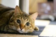 猫ブーム到来は景気のもたつきを示す