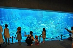 様々な割引サービスを受けられる水族館の年間パスポート