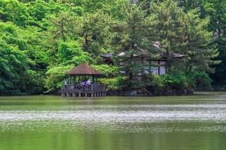 都内でも屈指の緑の多さを誇る石神井公園(三宝寺池)