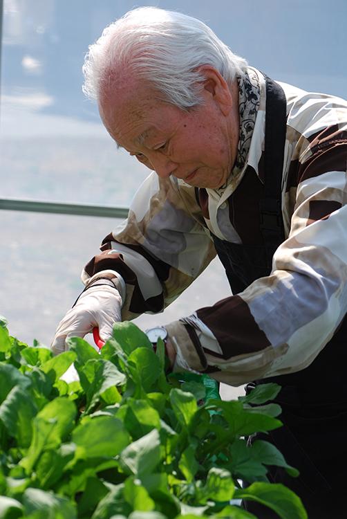 真剣な表情で収穫作業をする入居者