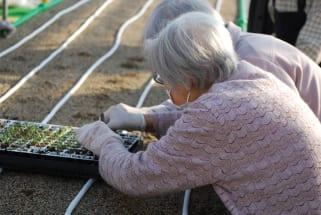 年齢や介護度などによる制約なしで農作業に従事でき、報酬もあるという