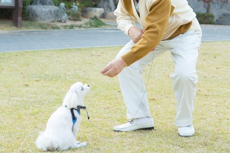 ペットを飼うなら治療費も念頭に(イメージ)