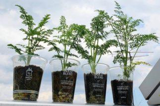 プラスチックカップを植木鉢代わりに使う例も