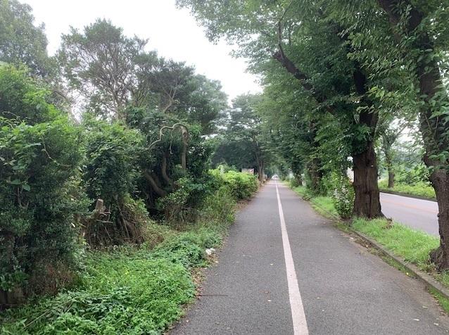 片側1車線の海軍道路は生活道路として利用されている
