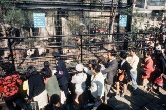 1972年上野動物園に来日したカンカンとランランのため、3時間並ぶ人も(時事通信フォト)