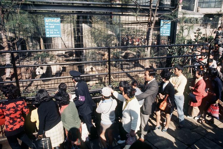 カンカンとランランを見る大勢の入園者(写真は1972年の上野動物園、時事通信フォト)