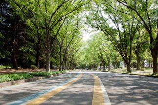 駒沢公園では有名タレントを目撃することも多い