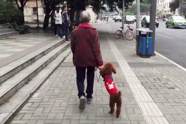 中国政府が主導する少子高齢化対策とは(写真:アフロ)