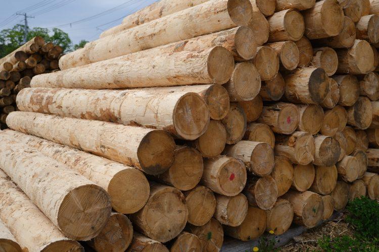 木材価格はトレードにどう活かせる?(イメージ)