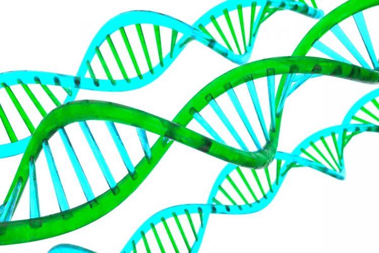 知能ややる気に遺伝の影響はどこまであるのか?(イメージ)