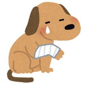 愛犬の治療費を請求できるか?(イメージ)